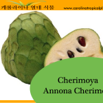 Cherimoya - Annona Cherimola Seeds - 10 Seed Count