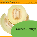 Golden Honeydew Seeds - 25 Seed Count