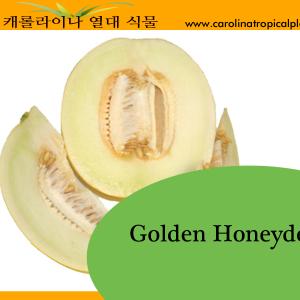 Golden Honeydew Seeds - 25 Seed Count