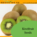 Kiwifruit Seeds - 25 Seed Count