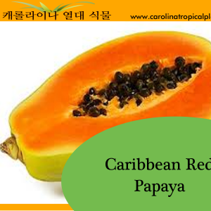 Caribbean Red Papaya Seeds - 25 Seed Count