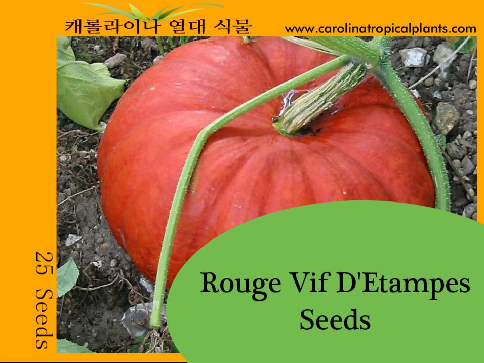 Rouge Vif D'Etampes - Cinderella Pumpkin Seeds - 25 Seed Count