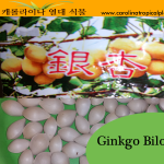 Ginkgo Biloba Seeds - 5 Seed Count