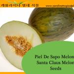 Piel De Sapo - Santa Claus Melon Seeds - 20 Seed Count