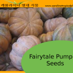Fairytale Pumpkin Seeds - 5 Seed Count