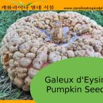 Galeux d'Eysine Pumpkin Seeds - 5 Seed Count
