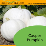Casper Pumpkin Seeds - 5 Seed Count