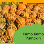 Kamo Kamo Pumpkin Seeds - 5 Seed Count