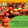 Germination Information for Pumpkin on a Stick Seeds