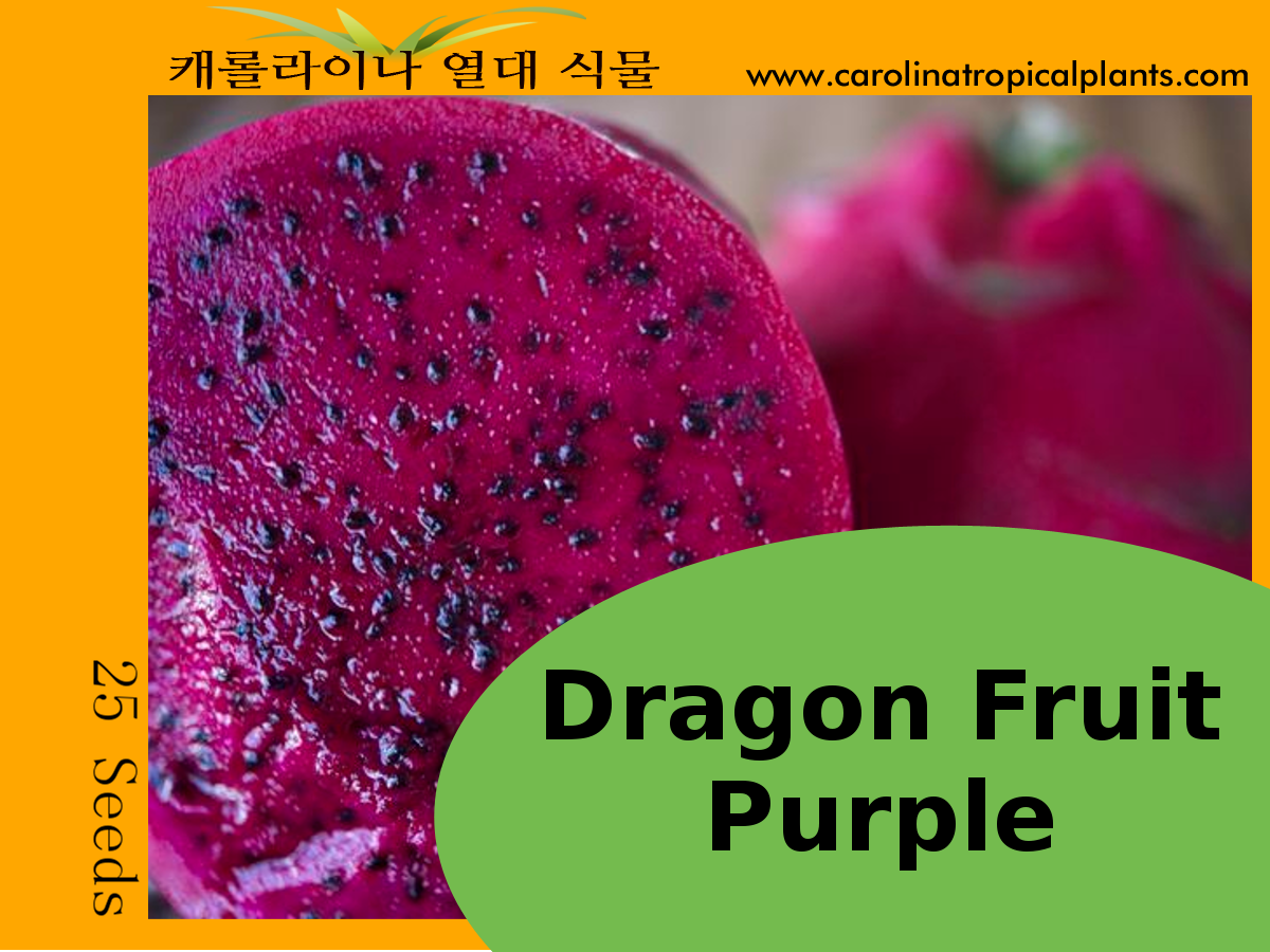 Purple Dragon Fruit Seeds - 25 Seed Count