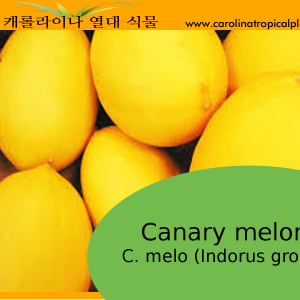 Canary melon - C. melo (Indorus group) Seeds - 10 Seeds