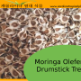 Germination information for Moringa oleifera seeds