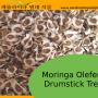 Germination information for Moringa oleifera seeds