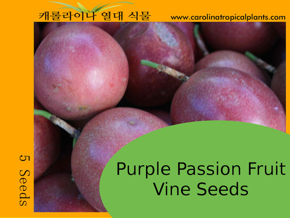 Tropical Exotic Passion Fruit Seeds for sale - 5 Seed Count