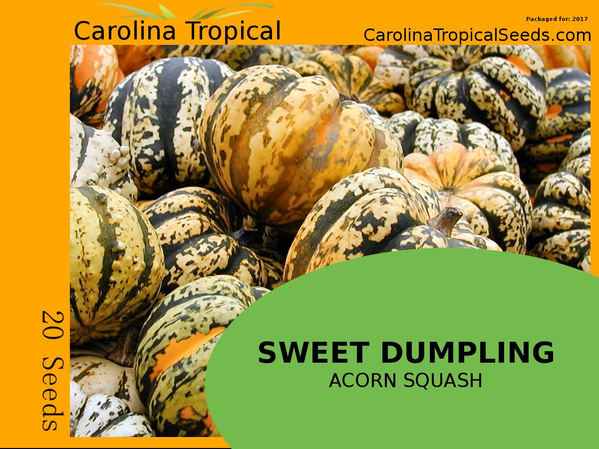 Sweet Dumpling Acorn Squash Seeds - 20 Seed Count