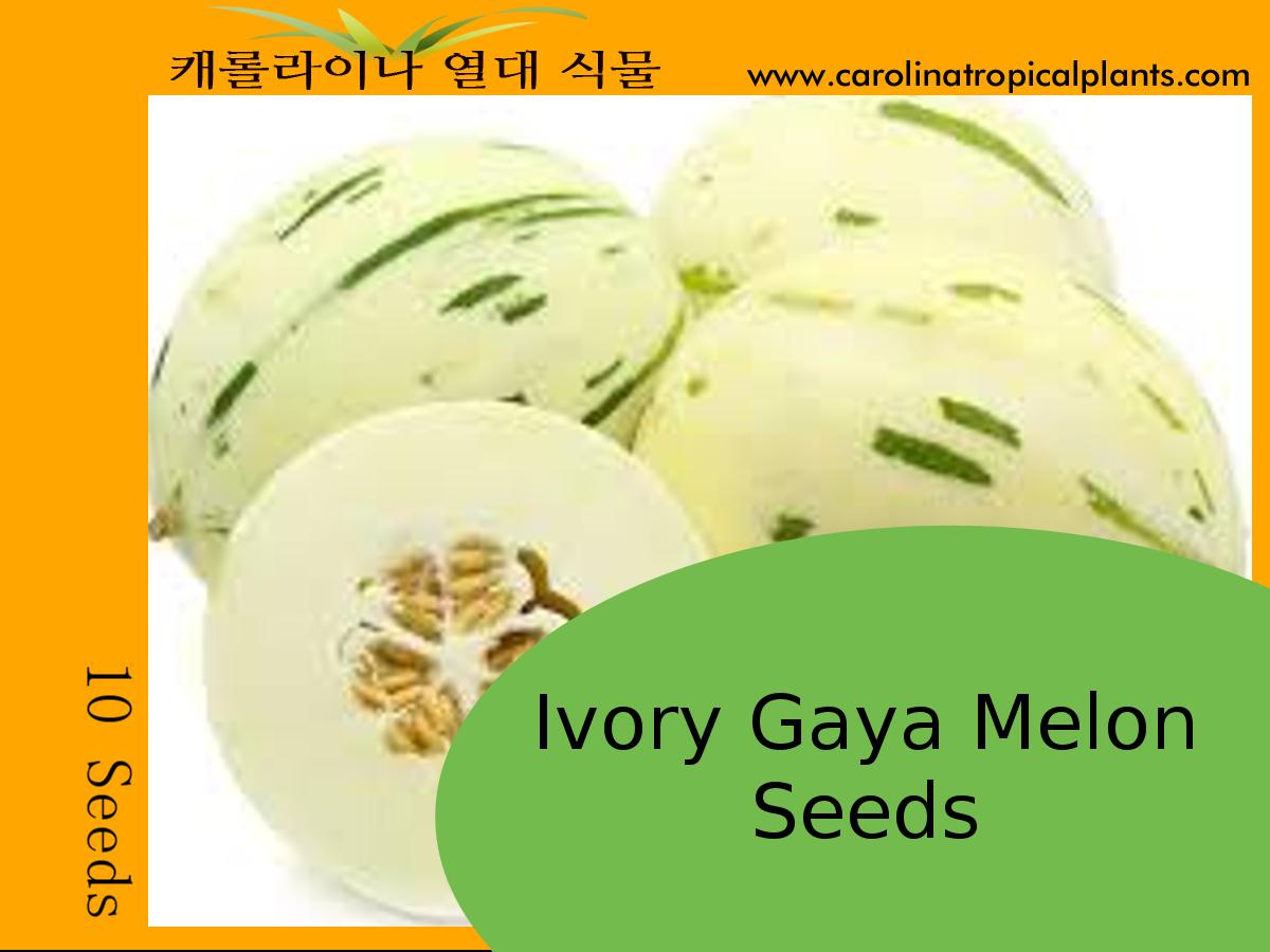 Ivory Gaya Melon Seeds – 10 Seeds