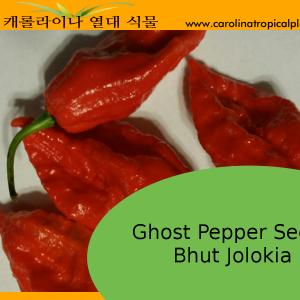 Ghost Pepper Seeds (Bhut Jolokia) – 10 Seeds