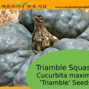 Triamble Squash Seeds