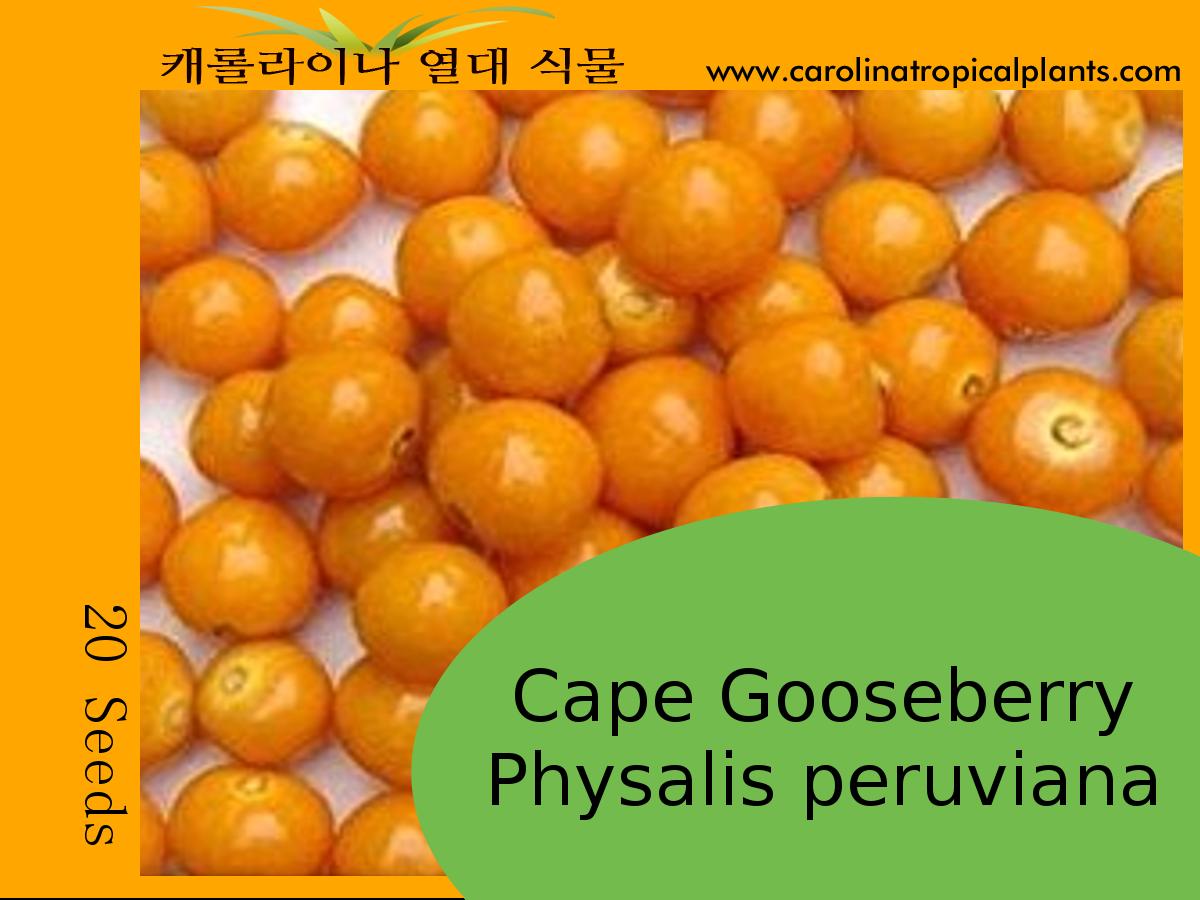 Cape Gooseberry Seeds - 20 Seeds