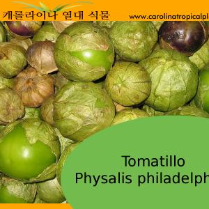 Tomatillo - Physalis philadelphica – 20 Seeds