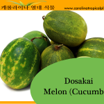 Dosakai Melon (Cucumber) Seeds - 20 Seed Count