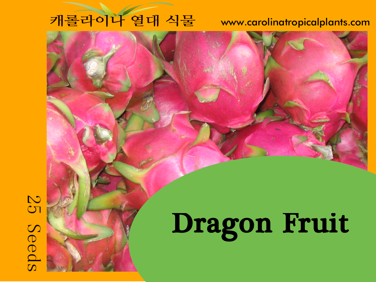 Dragon Fruit / Hylocereus undatus