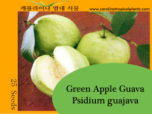 Green Apple Guava - Psidium guajava Seeds - 25 Seed Count