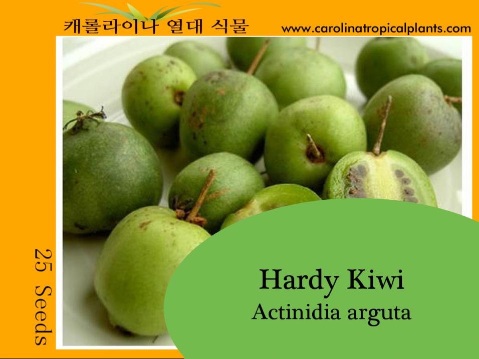 Hardy Kiwi - Actinidia arguta Seeds - 25 Seed Count
