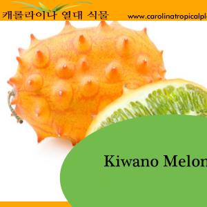 Kiwano Melon Seeds - 25 Seed Count