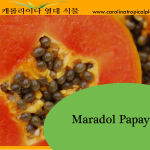 Maradol Papaya Seeds - 25 Seed Count