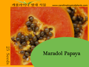 Maradol Papaya Seeds - 25 Seed Count