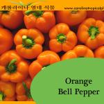 Orange Bell Pepper Seeds - 25 Seed Count