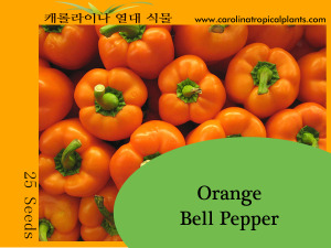 Orange Bell Pepper Seeds - 25 Seed Count