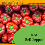Red Bell Pepper Seeds - 25 Seed Count