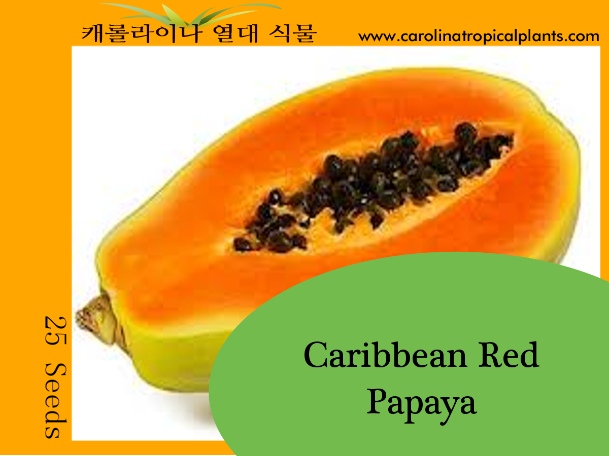 Red Caribbean Papaya Seeds