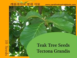 Teak Treet - Tectona Grandis Seeds - 10 Seed Count