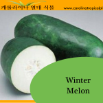 Winter Melon Seeds - 20 Seed Count