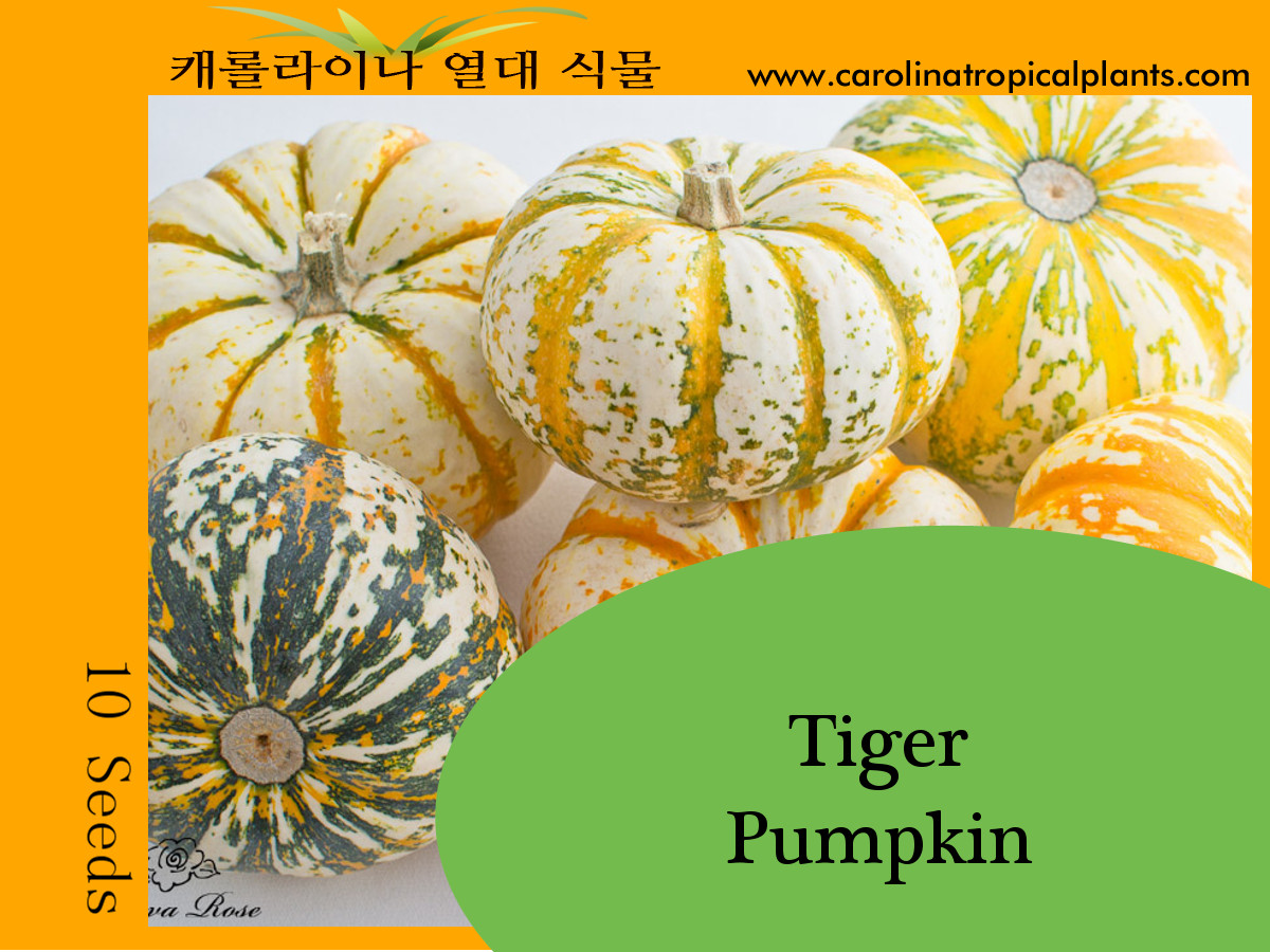 Mini Tiger Pumpkin Seeds - 10 Seed Count