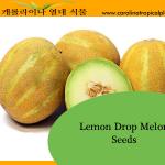 Lemon Drop Melon Seeds - 10 Seed Count