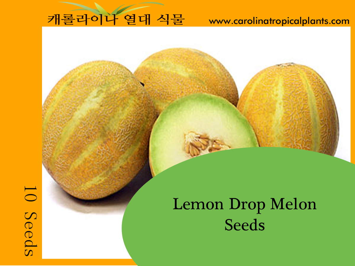 Lemon Drop Melon Seeds - 10 Seed Count