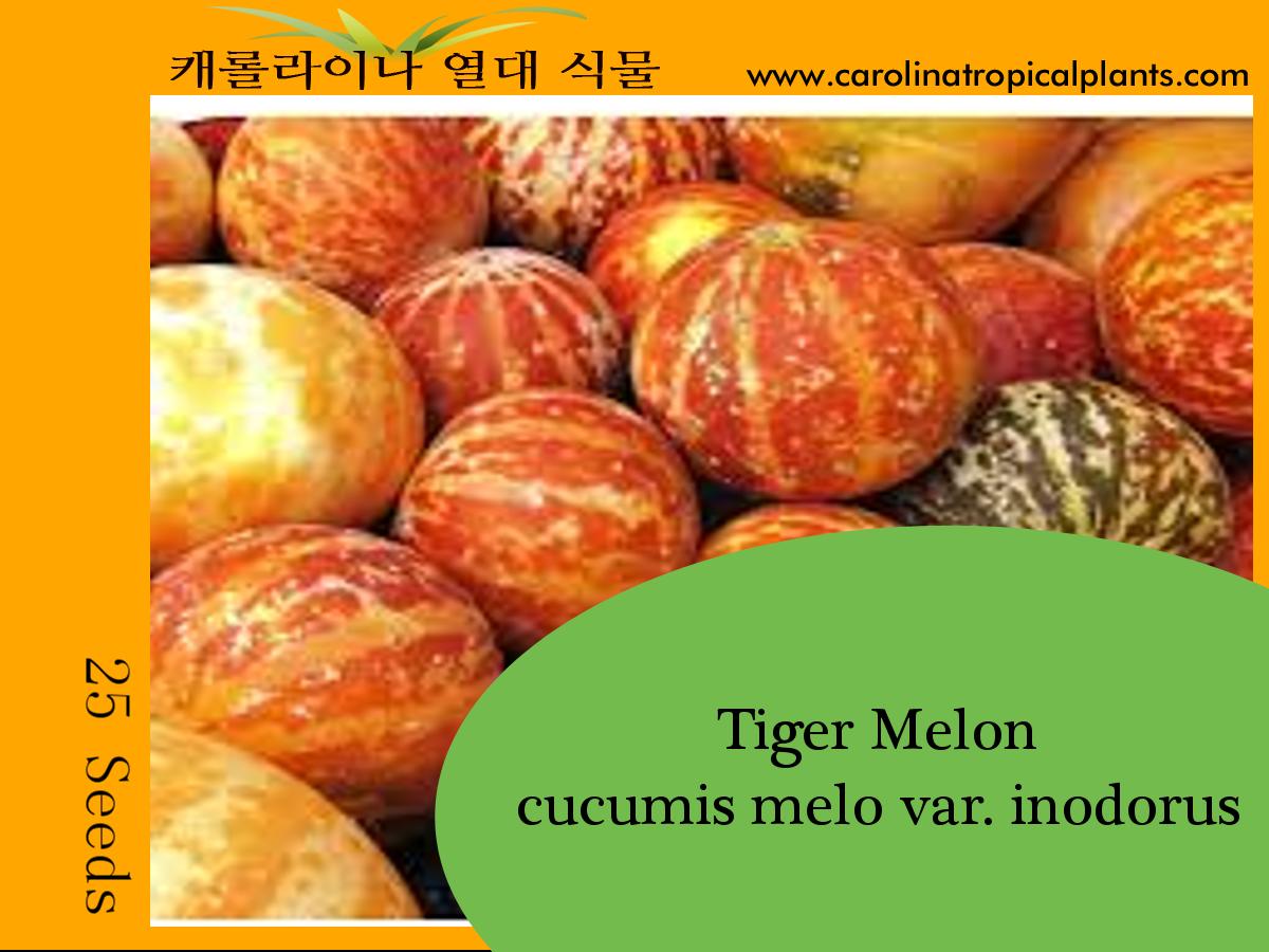 Tiger Melon - Cucumis melo var. inodorus Seeds - 25 Seed Count