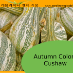 Autumn Colors Cushaw Seeds - 5 Seed Count