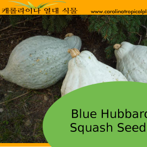 Blue Hubbard Squash Seeds - 5 Seed Count
