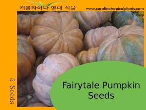 Fairytale Pumpkin Seeds - 5 Seed Count