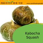 Kabocha Squash Seeds - 10 Seed Count