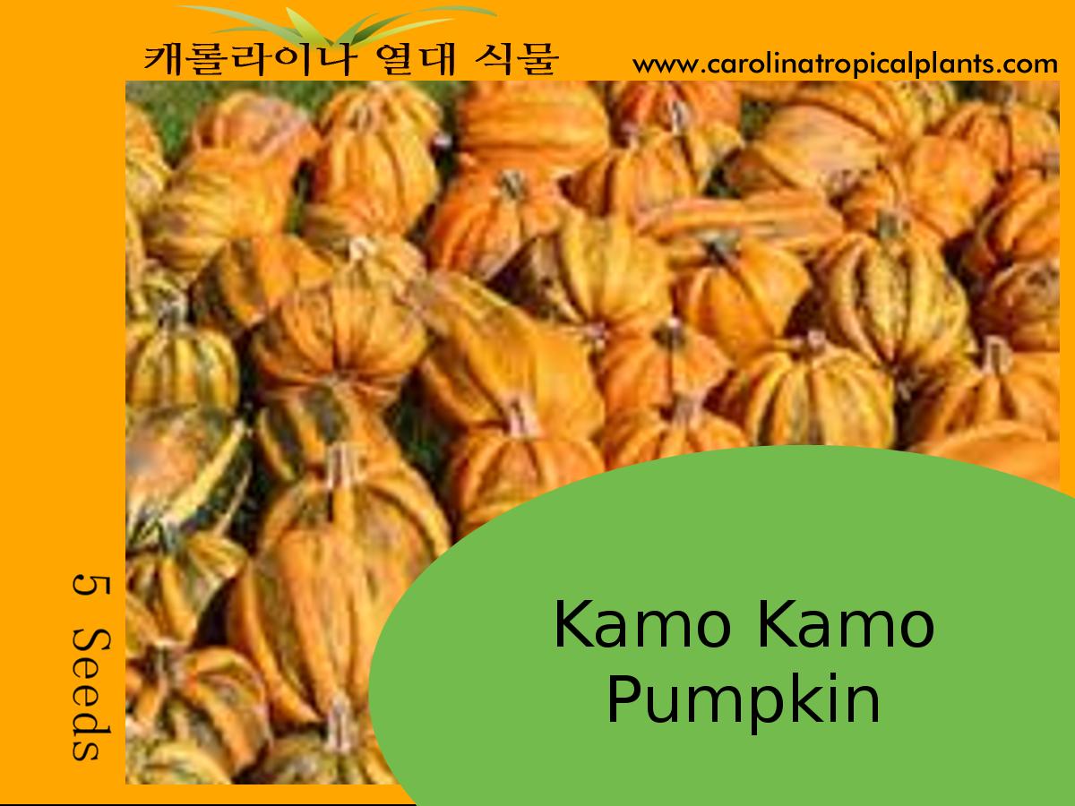 Kamo Kamo Pumpkin Seeds - 5 Seed Count