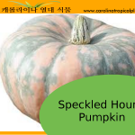 Speckled Hound Pumpkin Seeds - 5 Seed Count