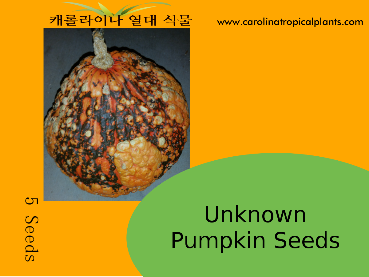 Pumpkin Seeds - 5 Seed Count
