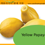 Yellow Papaya Seeds - 25 Seed Count