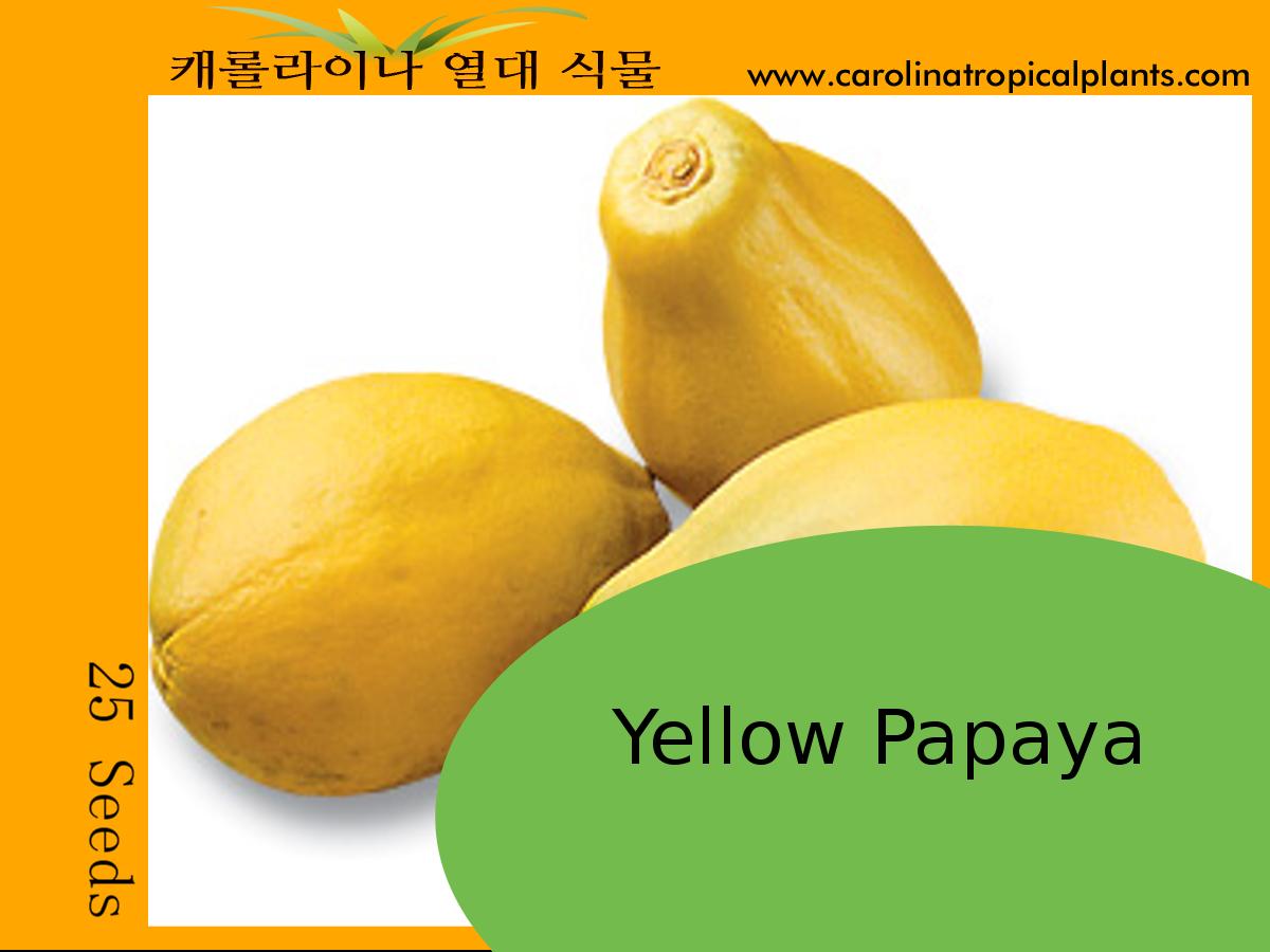 Yellow Papaya Seeds - 25 Seed Count